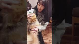 勝田里奈さんと上國料萌衣さんがただイッヌと戯れて癒されるだけの動画