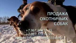 Охота с гончими на зайца. Часть 1. С Олегом Щербаковым.