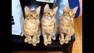 Funny Cats Compilation 2014   18 Min HD !