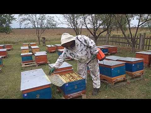 Обработка пчел с помощью распылителя