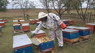Обработка пчёл с помощью опрыскивателья