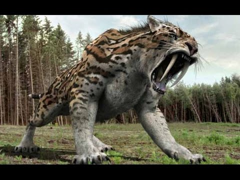 Documental De TIGRE Diente De Sable Cazadores Prehistoricos Documental De NationaL  Geographic