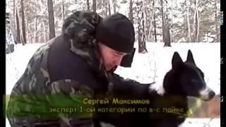 Трагедия Восточно-сибирской Лайки