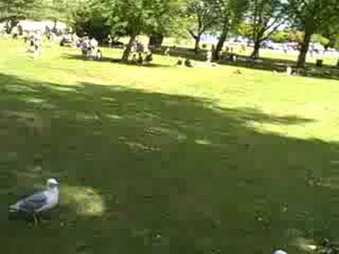 Feeding Seagulls @ Stanley Park