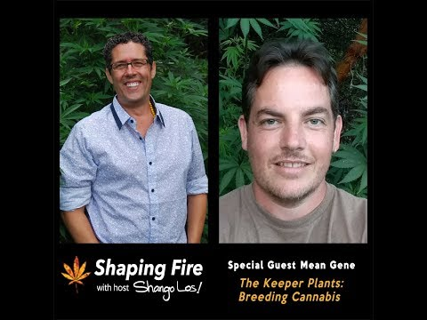 Shaping Fire Ep. 24 - The Keeper Plants: Cannabis Breeding with guest Mean Gene