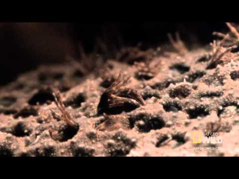 World S Weirdest Baby Toads Born From Mom S Back Youtube