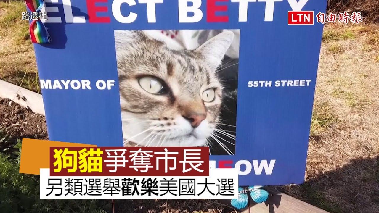 候選人是貓星人與汪星人! 另類市長選舉歡樂美國大選氣氛