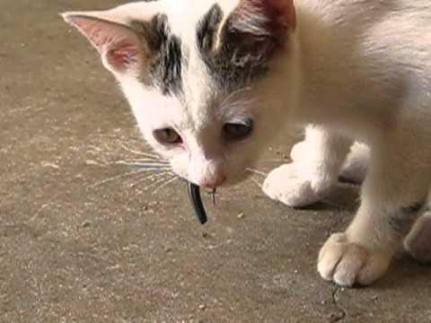 ネズミ・トカゲ・ムカデを食べる猫。むしゃむしゃ食べる音がリアル過ぎて…