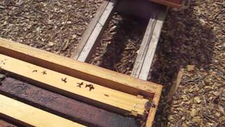 Beekeeping: How To Inspect A Honey Bee Hive