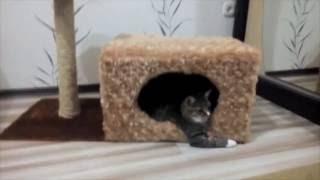 Когтеточка. Домик для кота своими руками. Часть 2
