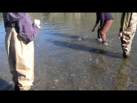 Steelhead Fishing With Rob's Guide Service