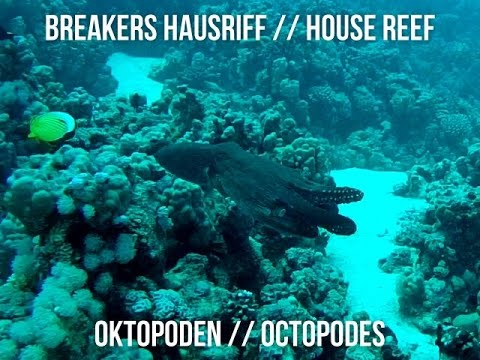 Breakers Hausriff Oktopoden // House Reef Octopodes
