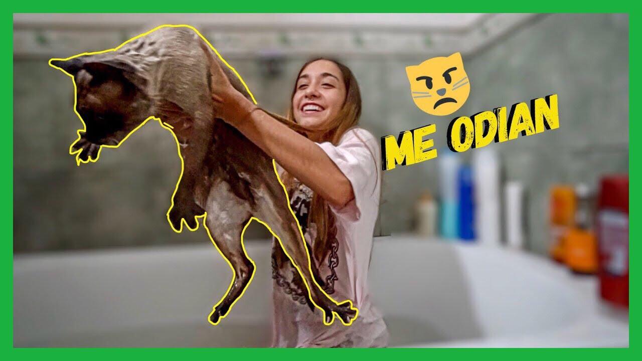 Bañando A Mis Gatitos Maria Becerra Youtube
