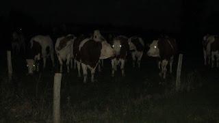Une journée dans un élevage laitier en novembre 2015.