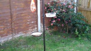New Bird Feeding Station (10.4.2011)