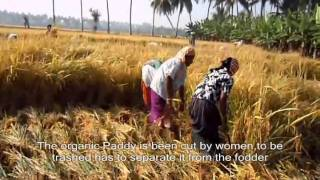 SEVAI Agriculture - ORGANIC PADDY CULTIVATION