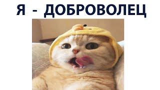 Новые приколы и мемы с котами 2021 год. Порция мемов 375