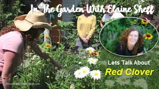 Green Path Herb School - Herbalist Elaine Sheff talks about the won...