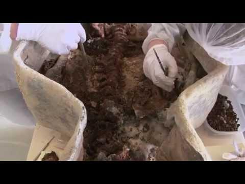 Les sarcophages des