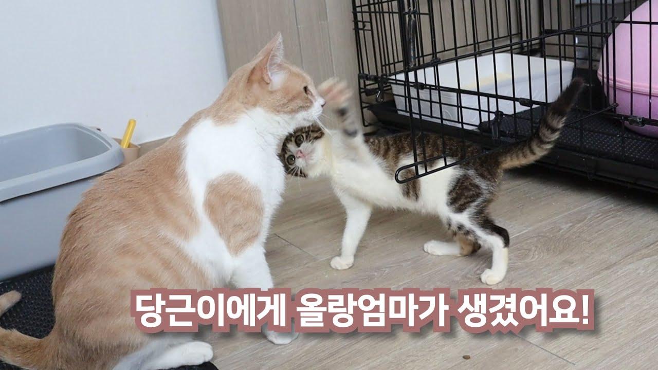 묘생 2달차, 새로운 엄마고양이를 만나다. (feat. 고양이모성애)