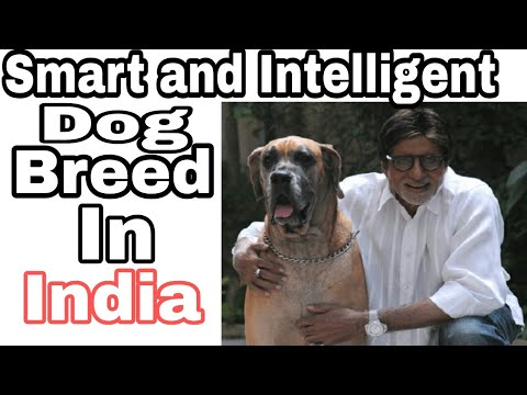 "Top-10 Most Smart And Intelligent Dog Breed In India / Popular breed in indian / ""Aryan Dog Club"""