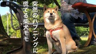 愛犬への思いを歌ったオリジナルソング「モモの歌」です。 公園で練習し...