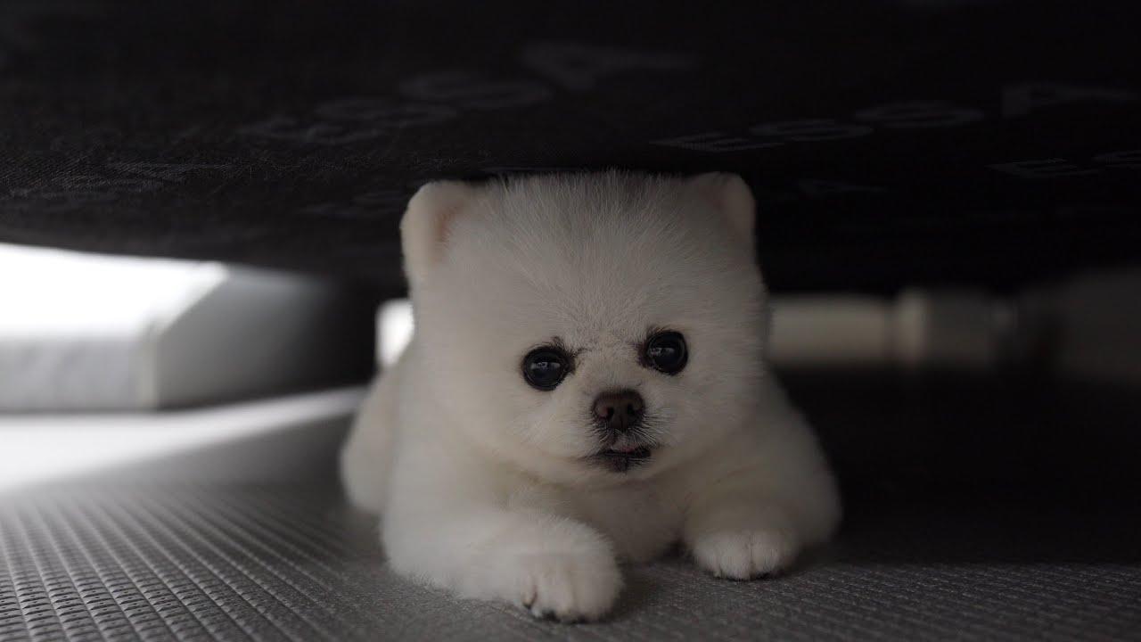 맨날 화내고 매일 삐치지만 너무 사랑스러운 강아지 (이 모든 상황이 24분만에 일어남ㅋㅋㅋ)