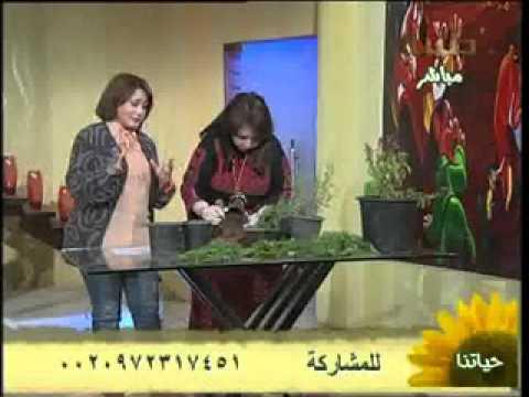 زراعة الخضروات فى المنزل - مها مرعى - قناة طيبة