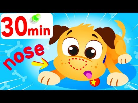 Where Is My Nose? Little Puppy Dog Lost His Nose!  My Pet Buddy BINGO! Animal Songs by Little Angel