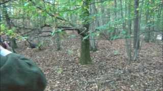 A Running boar shot with an express 9.3x74R