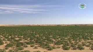 الجزائر - الوادي | الإستثمار الفلاحي :   بعد تحقيق الوفرة الرهان على الجودة لتعزيز الصادرات