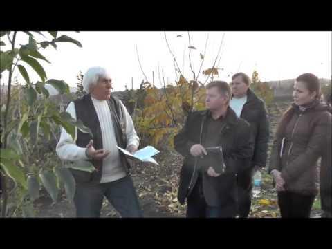 Как садить грецкий орех