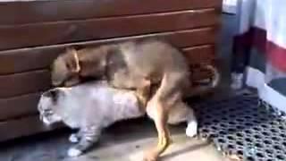 Ljudi sa zivotinjama sex (VIDEO) KADA