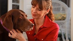Top 10 Best Dog Trainers in the United States