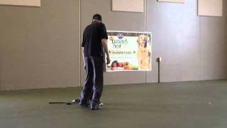 Dallas (bernese Moutain Dog) - Boot Camp Dog Training Demonstration