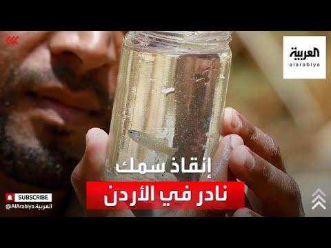 محمية في الأردن تتسابق لإنقاذ أسماك مهددة بالانقراض  - نشر قبل 2 ساعة
