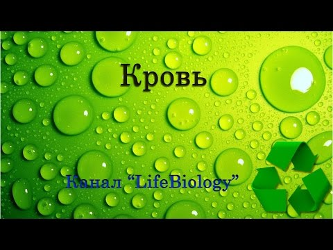 Биохимический анализ крови. Анализы и диагностика