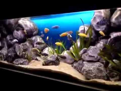 Malawi aquarium 160x60x60 african cichlid lake malawi for 10 fish in a tank riddle