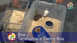 Reptil.TV - Folge 17 - Fütterung von Schlangen