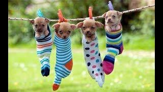 Собачий рынок Одесса. Староконный рынок. VLOG. Сегодня в Одессе. Порода собаки. Наши собаки. Чудо.