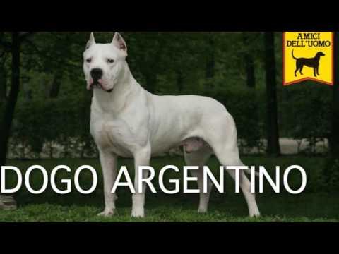 Top 10:Najjaci psi na svetu (Specijal povodom 50 subscribera)