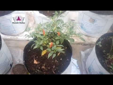 Organic terrace farming youtube for Terrace vegetable garden by harikumar