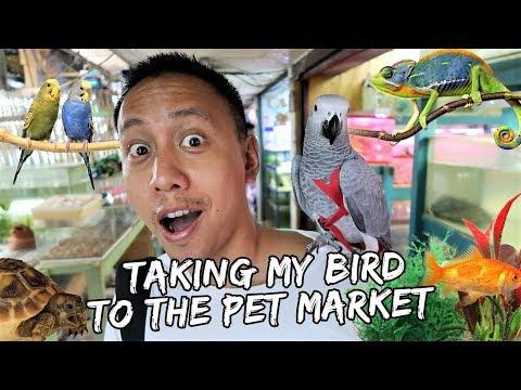 Taking My Bird to the Pet Market | Vlog #404