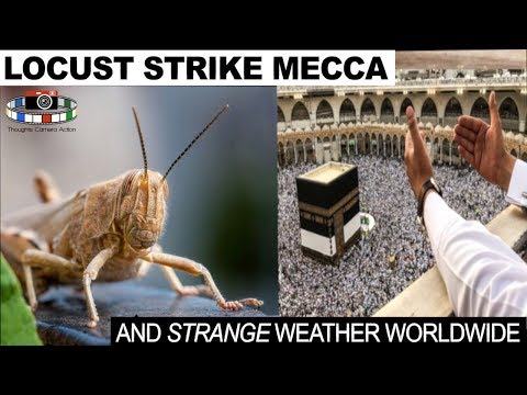 🕋 LOCUST STRIKE MECCA THE HOLIEST SITE IN ISLAM  🕌 AND STRANGE WEATHER WORLDWIDE 🌎