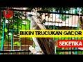 Pancingan Trucukan Gacor Bikin Trucuk Lain Cepat Gacor Seketika  Mp3 - Mp4 Download