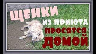 ПРИЮТ ДЛЯ БЕЗДОМНЫХ ЖИВОТНЫХ  Бездомные собаки щенки и бездомные кошки ПОМОЩЬ БЕЗДОМНЫМ ЖИВОТНЫМ