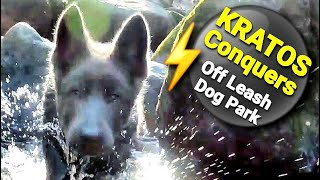 12wk KRATOS Conquers Off Leash Training  Puppy's 1st Time at Dog Park