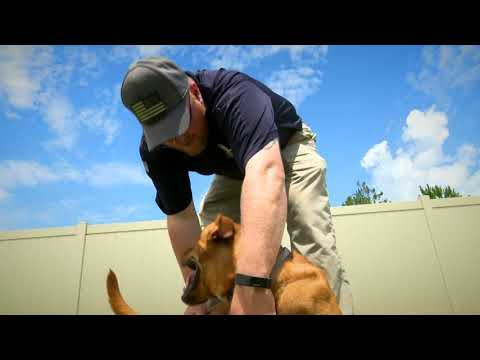 Emmy - award winning story on James and his K9s for Warriors service dog, Dunkin