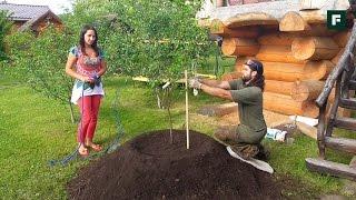 Посадка плодовых деревьев на клумбы
