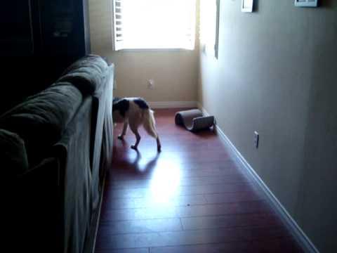 BuddyFoster Dog CCBC Rescue